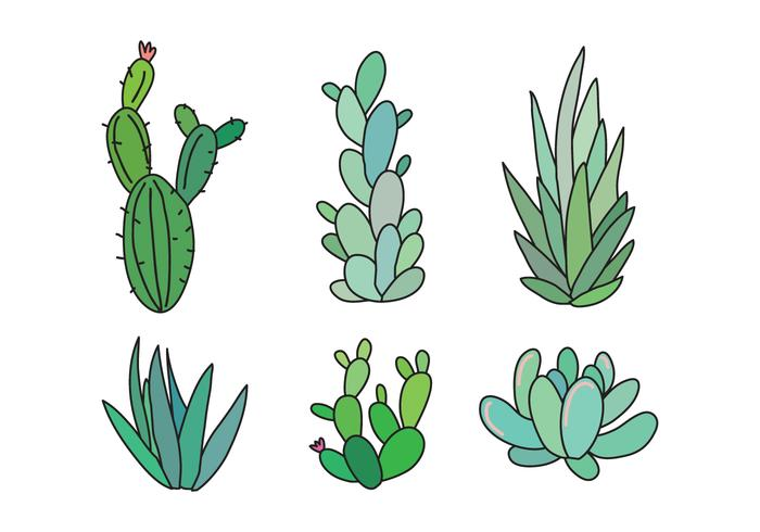 Set of Succulents and Cactus
