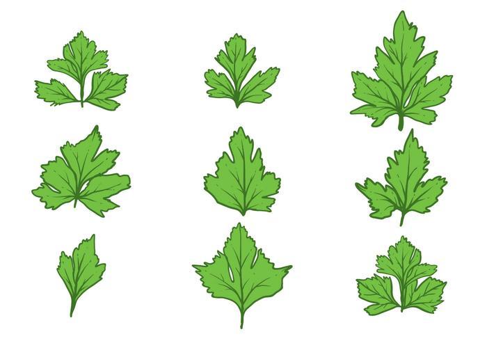 Ensemble de cilantro à manches libres vecteur