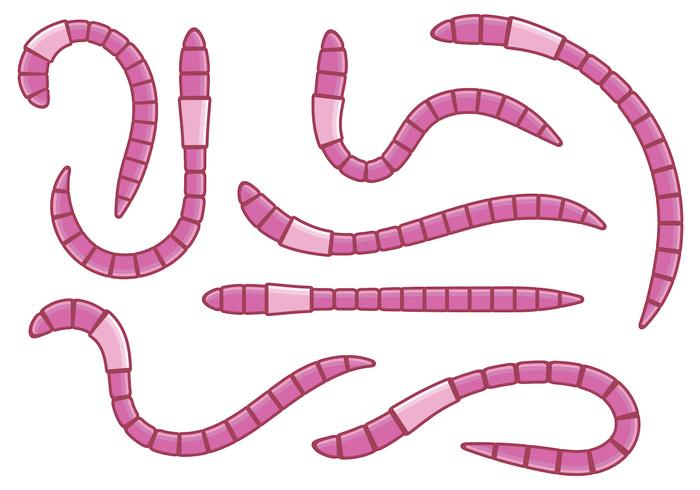 Vectores rosados de la lombriz