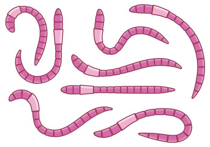 Pink Earthworm Vectors