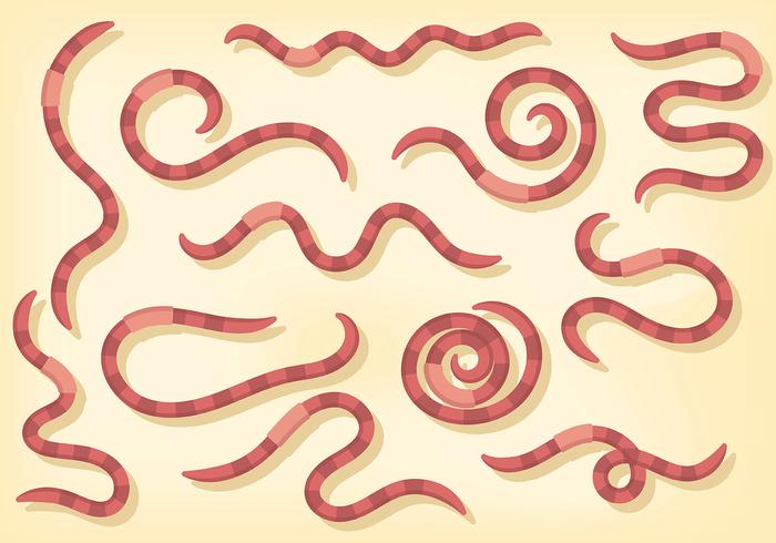 Free Earthworm Icons Vector