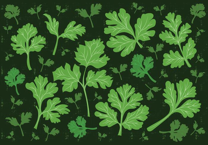 Cilantro Leaf Vector Background