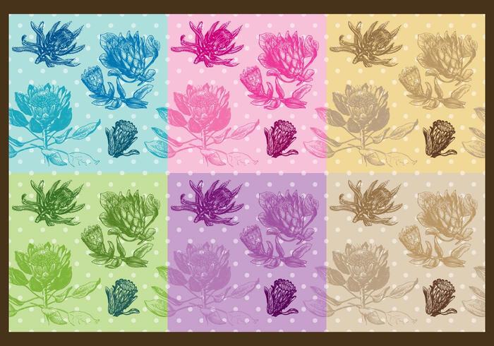 Patrones de Protea