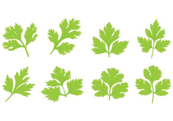 Set Of Cilantro Leaf Vector