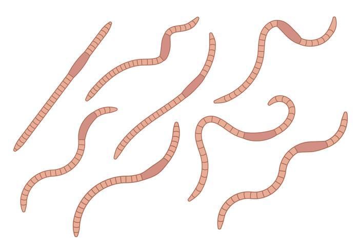 Earthworm Vector Set