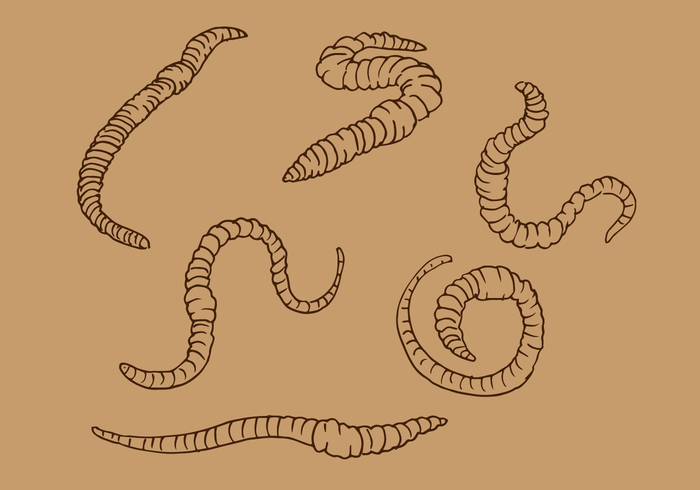 Vector de contorno de lombriz