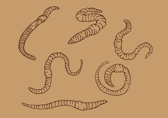 Earthworm Outline Vector