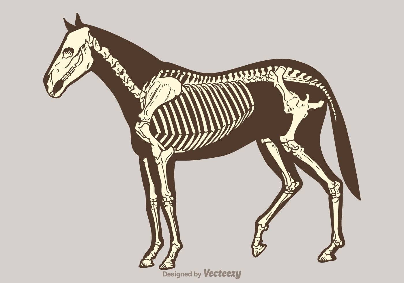 Free Vector Horse Skeleton Download Free Vectors Clipart Graphics Vector Art