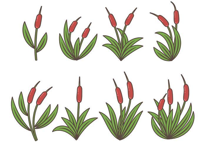 Vetor colorido do ícone dos Cattails