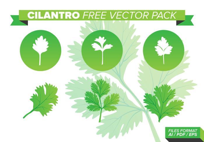Pack gratuit de vecteurs de cilantro