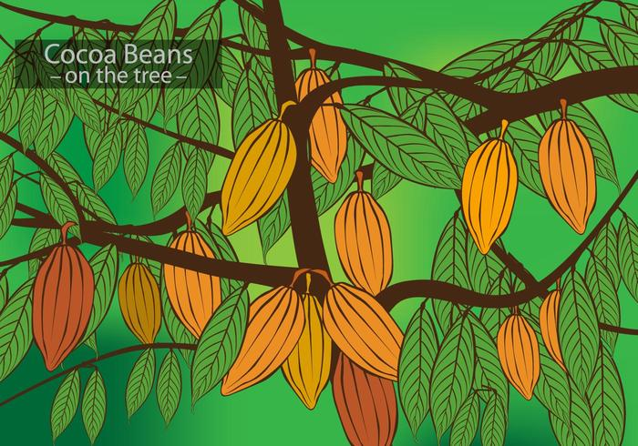 Cocoa Beans on the Tree Vector