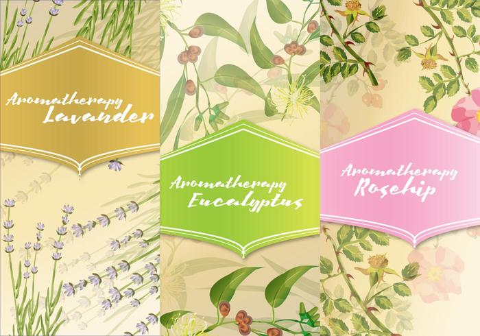 Three Aromatherapy Cards vector