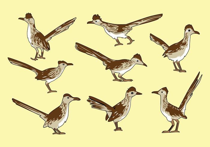 Vecteur oiseau roadrunner gratuit