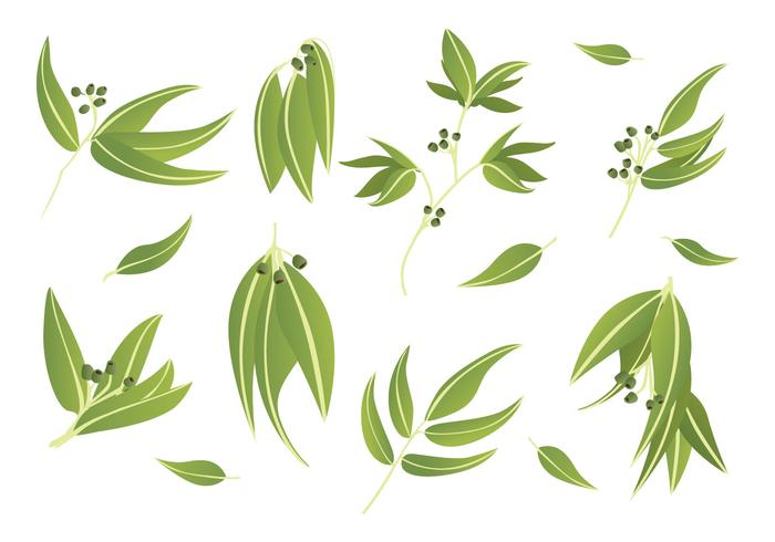 Gratis Eucalyptus Ikoner