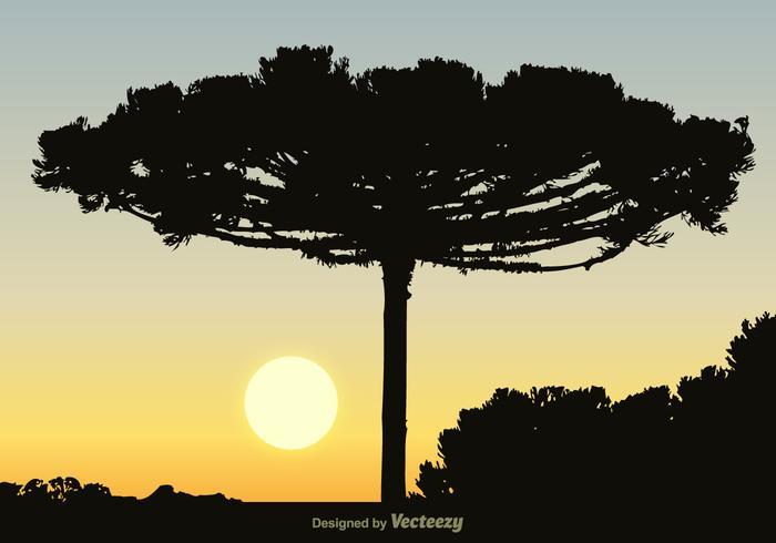 Gratis Zwarte Araucaria Vector Achtergrond