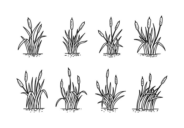 Cattails Hand Drawing Vector