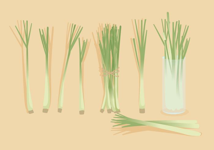Lemongrass Vector