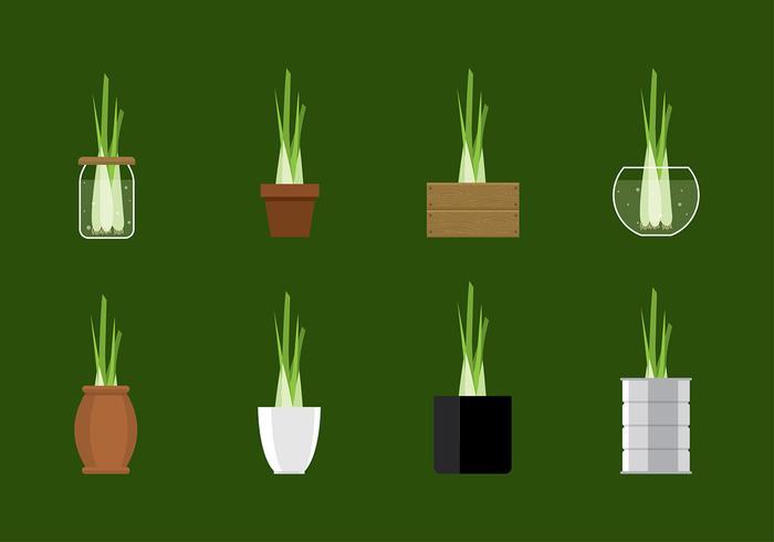 Citroengras Plant Vector