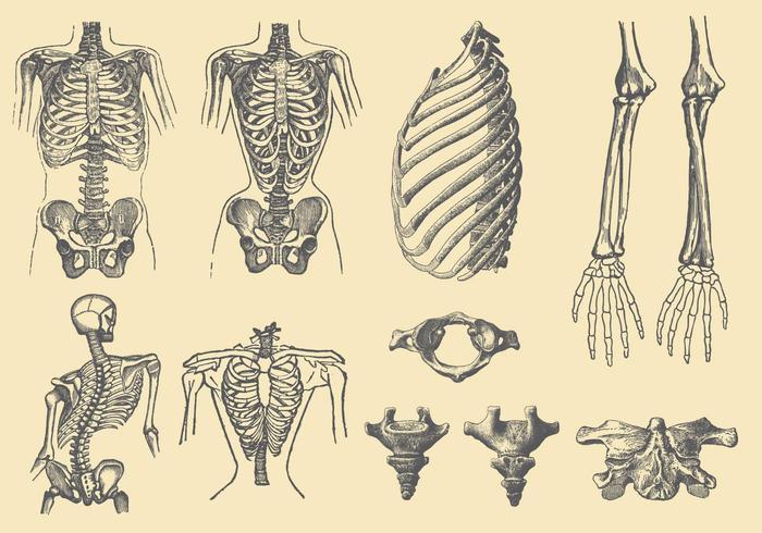 Menschliche Knochen und Deformationen