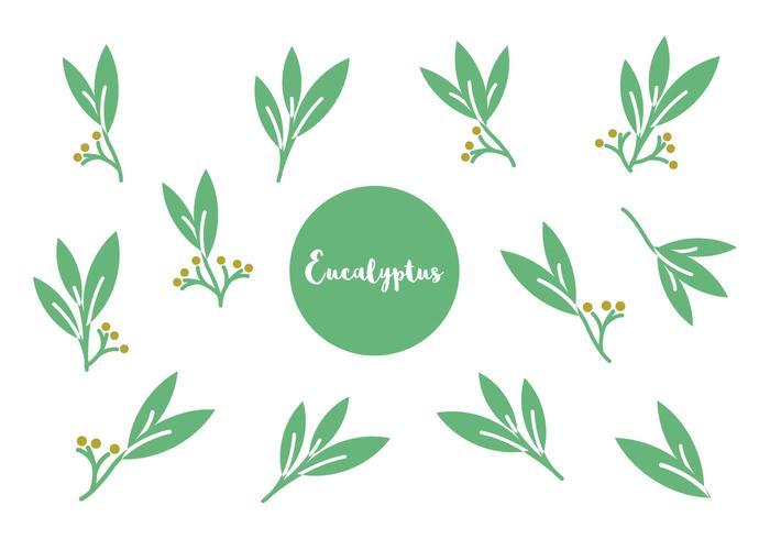 Gratis Eucalyptus Icon Vector
