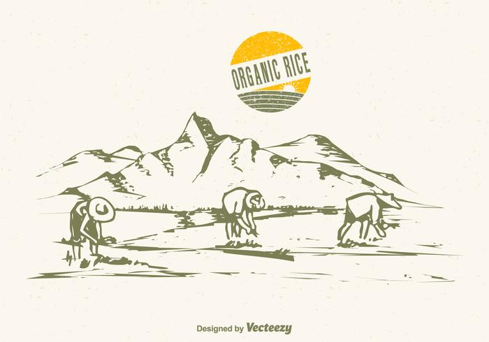 Free Drawn Rice Field Vector Illustration