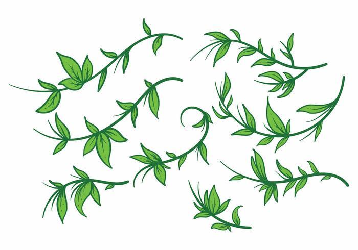 Free Liana Plant Vector set