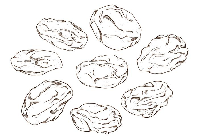 Free Raisins Vector Illustration