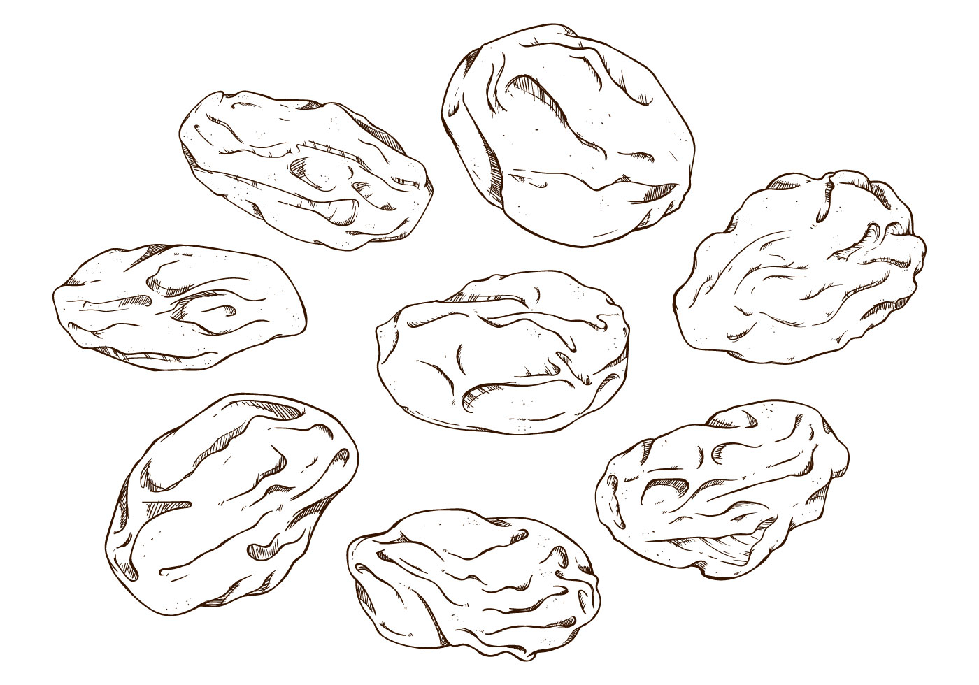 Free Raisins Vector Illustration Download Free Vector