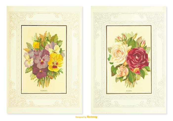 Pansy Vintage Flower Illustrations