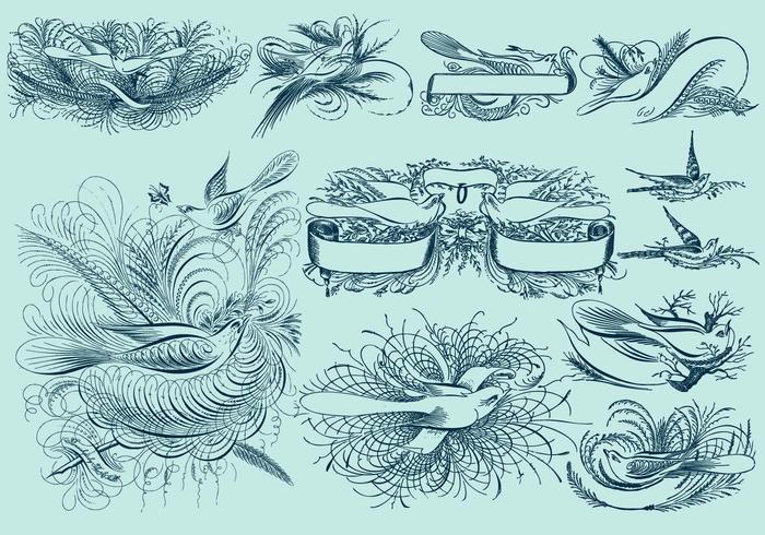 Pinstripe Bird Drawings