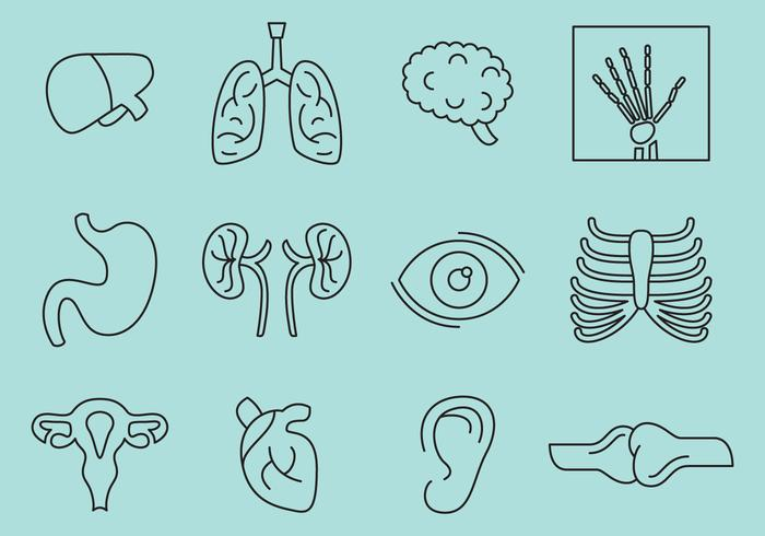 Bones And Organs Icons