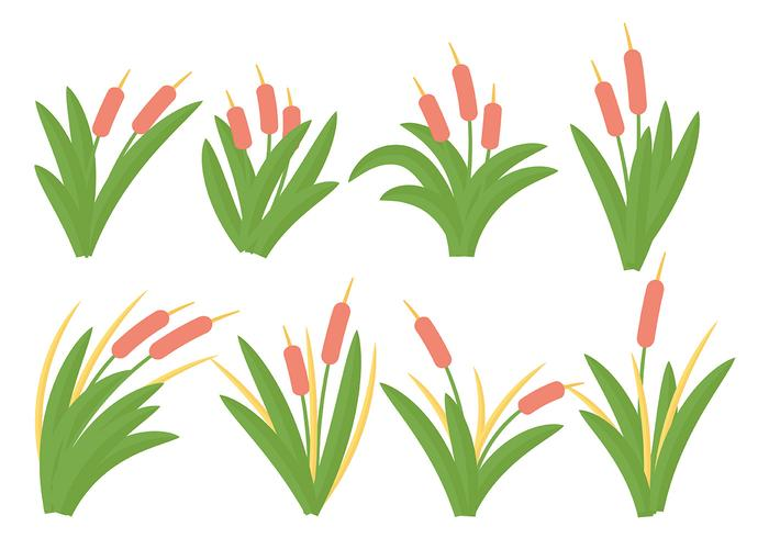 Free Cattails Icon Vector