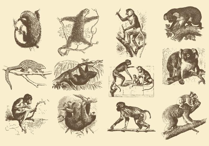 Vintage Illustrations Of Animals
