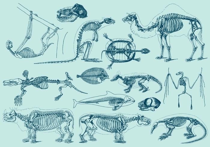 Esqueletos de animais vintage