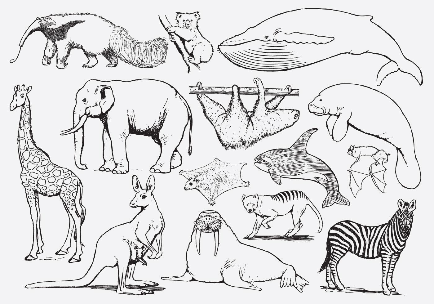 Colorir Animais Para Criancas Download Vetores Gratis Desenhos
