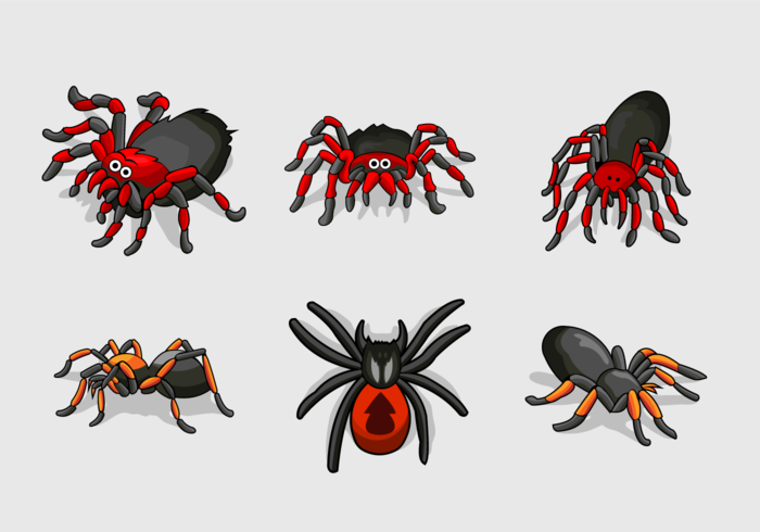 Tarantula color vector pack