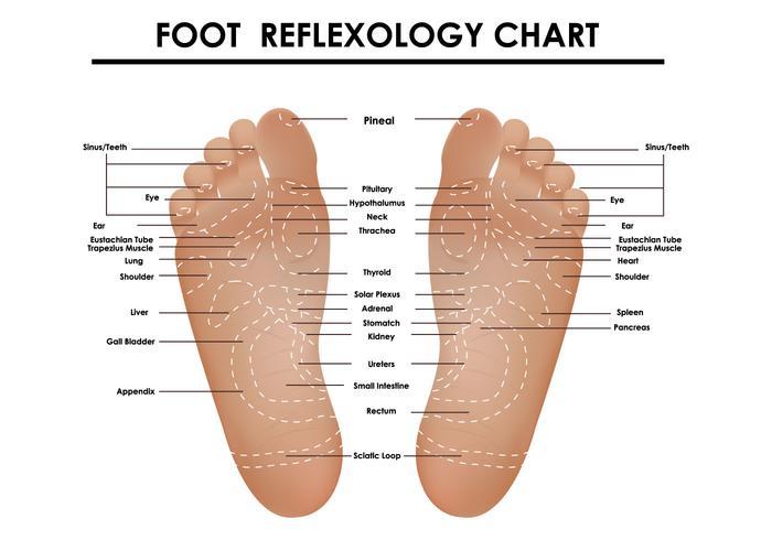 Foot Reflexology Chart Download Free Vector Art Stock Graphics