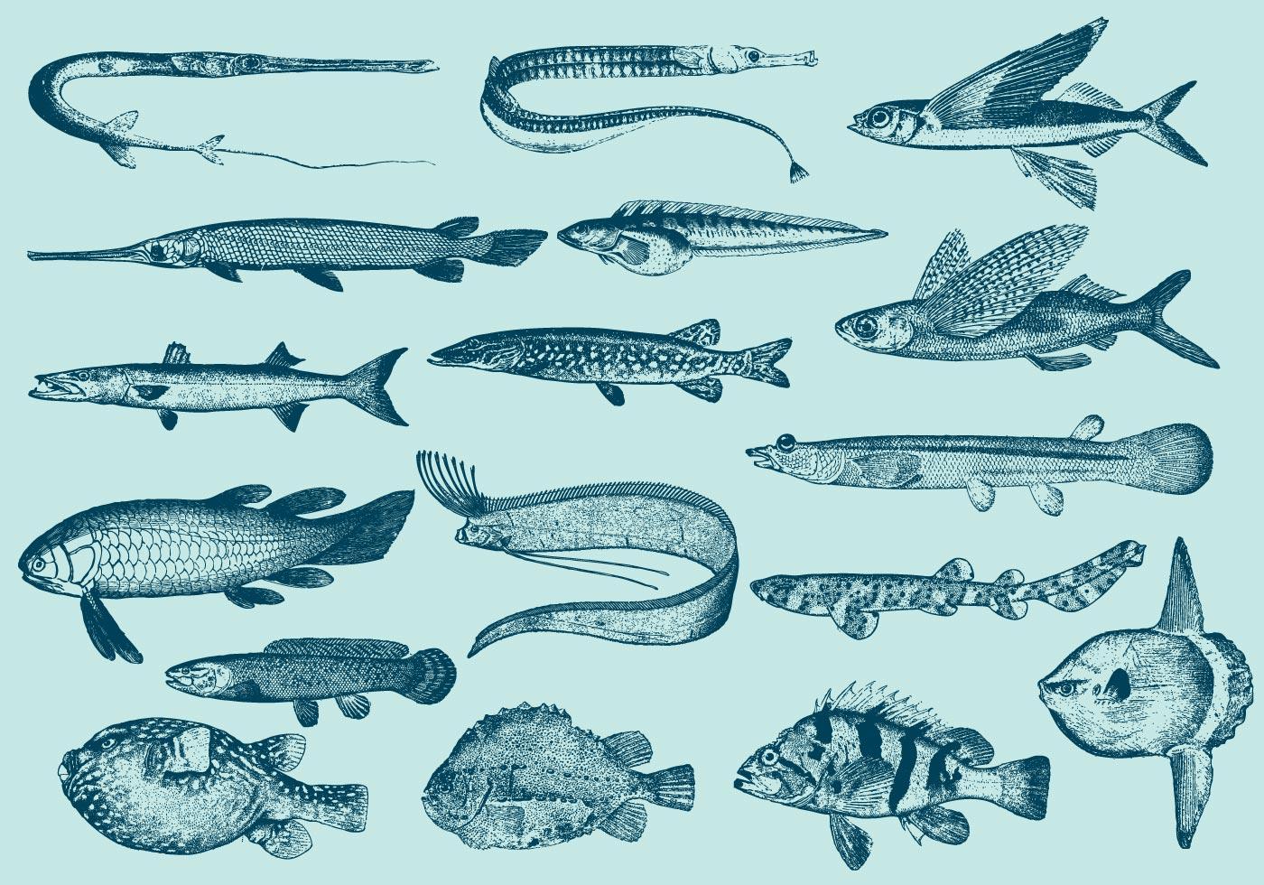 魚素材 免費下載   天天瘋後製