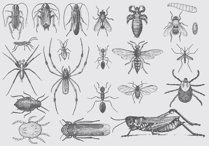Vintage Pest Drawings