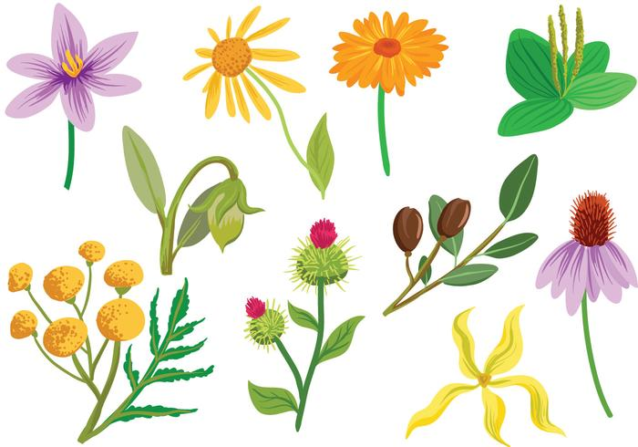 Free Cosmetic Plants Vectors