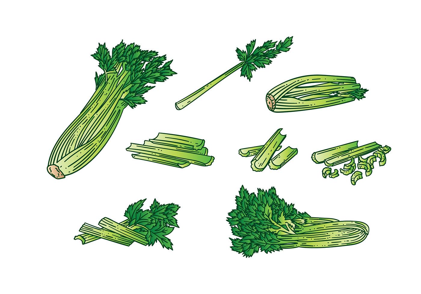 celery vector download free vector art stock graphics