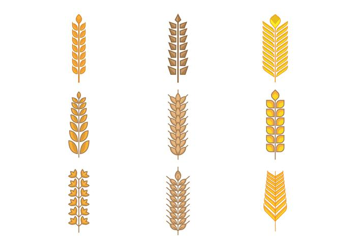 Free Types of Grains, Cereal, and Oats Vector