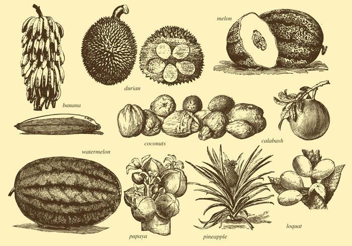 Vintage Tropical Fruits vector