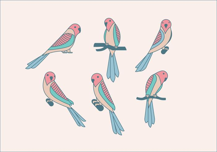 Budgie lindo vector