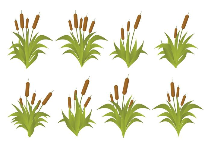 Free Cattails Vector Set