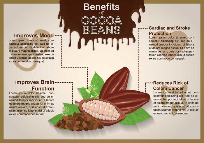 Illustrazione di fave di cacao vettore
