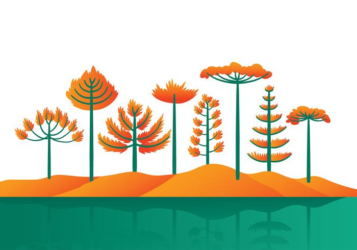 Araucaria Cartoon Vector