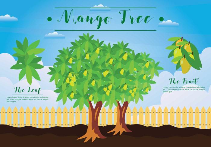 Free Mango Tree Illustration