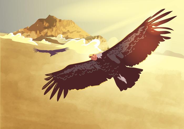 Condor Flying Vector