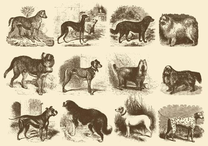 Illustrations vintage de chien